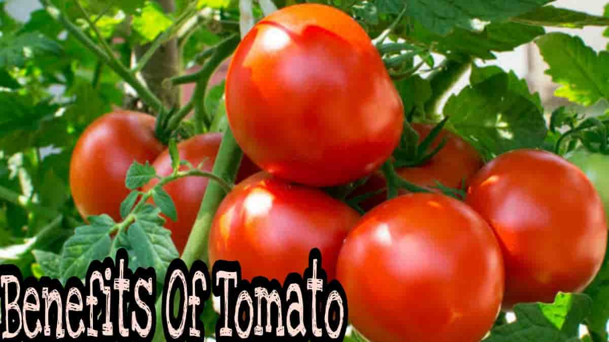 Tomato Benefits of eating raw tomatoes in the morning, What is the best time to eat tomatoes